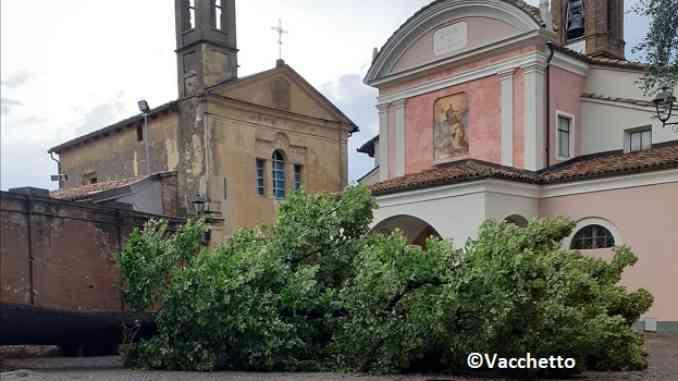 Il maltempo abbatte il tiglio secolare di Piazza Falletti a Barolo