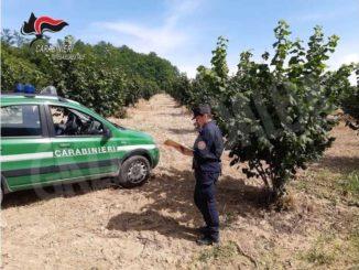 Controlli sui fitosanitari in agricoltura: illeciti in 21 ditte su 26