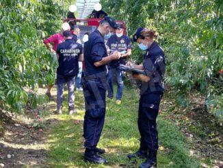 Lavoro nei campi, rispetto delle regole generalizzato ma i Carabinieri trovano 13 braccianti irregolari