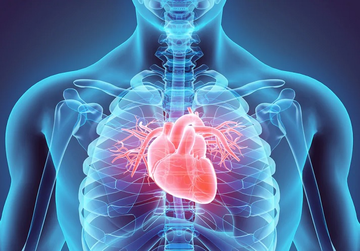 cardiologia-cuore