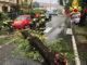 Disagi anche nel Vercellese a causa del maltempo di questa notte: caduti alberi e pali telefonici