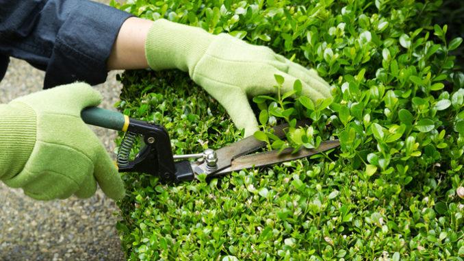 Bra: raccolta sfalci e scarti vegetali, il calendario fino a novembre
