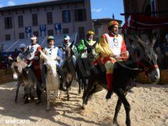 Borgo San Lorenzo vince il Palio degli asini 10