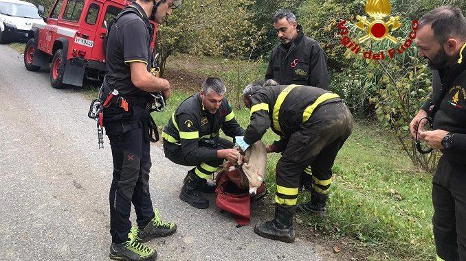 Tratto in salvo dai vigili del fuoco un cane caduto in un dirupo a Rocchetta Belbo