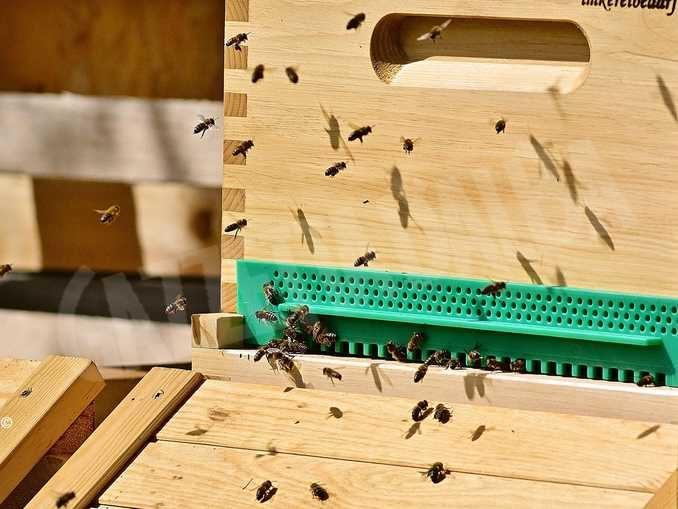 Stiamo decimando le nostre api: oltre un milione e mezzo di danni