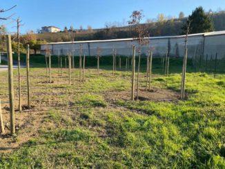 Un albero per ogni nuovo nato a Santo Stefano Belbo