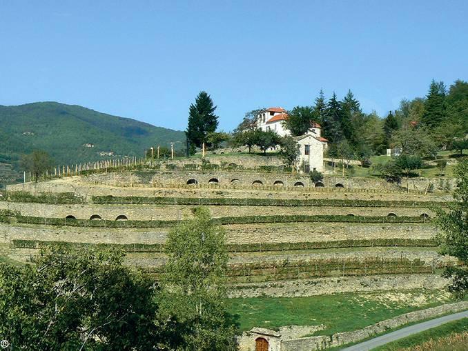 Cortemilia Monte Oliveto