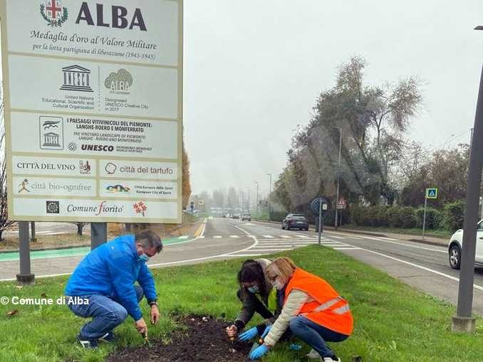 Messer tulipano di Pralormo dona tremila nuovi bulbi per le aiuole di Alba 2