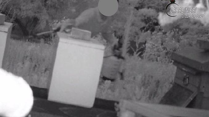 Spruzzava prodotti tossici su gli alveari in un allevamento di Sommariva Perno