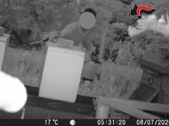 L'uomo ripreso dalle telecamere installate dal proprietario dell'allevamento