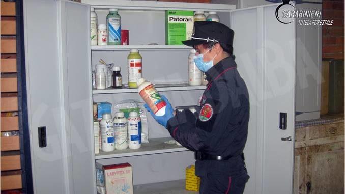 A Sommariva Perno api avvelenate con prodotti tossici