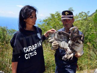 Nel calendario Cites dei Carabinieri dodici rare specie animali e vegetali