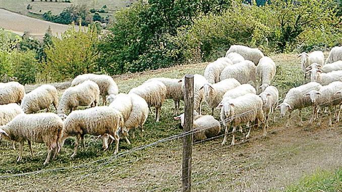 Pastorizia: il corso piace e ripartirà nella primavera 2021