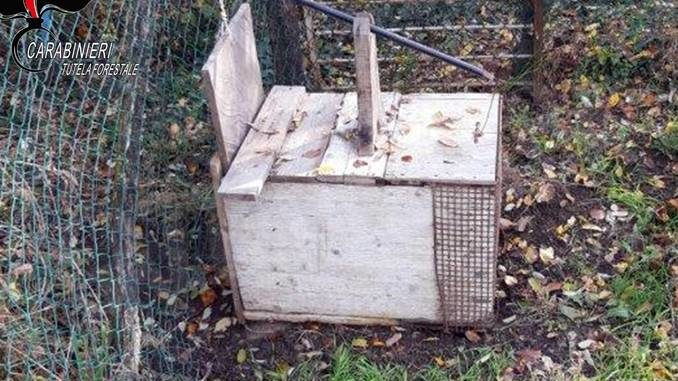 Trappole e lacci per catturare gli animali selvatici 1
