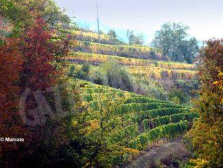 Più che un calo dei boschi, sulle colline piemontesi sta avanzando l'incolto, con l'agricoltura e l'allevamento impoveriti