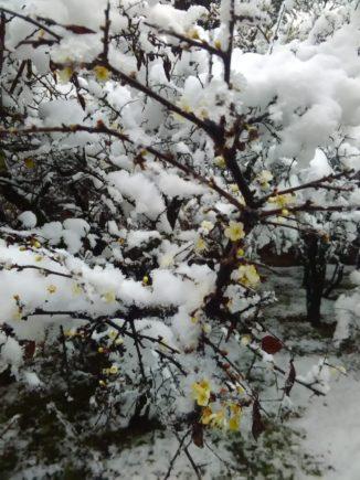 Festa dell'apparizione al santuario di Bra il 29 dicembre 1