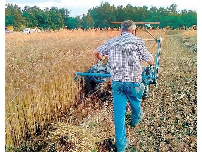 Tra Montà e Santo Stefano Roero si coltiva il grano come una volta 1
