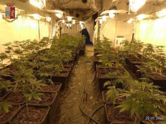 Canelli: coltivavano marijuana in una cascina, due arresti
