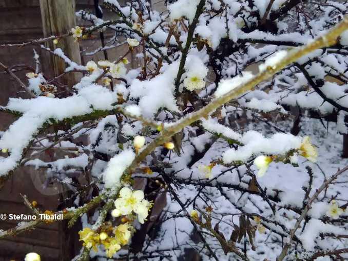 bra-madonna fiori pruneto