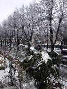 Il pruneto del santuario Madonna dei fiori saluta la neve che scende 1