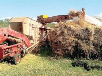 Tra Montà e Santo Stefano Roero si coltiva il grano come una volta