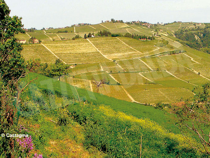 langhe-vigna-filari-panorama