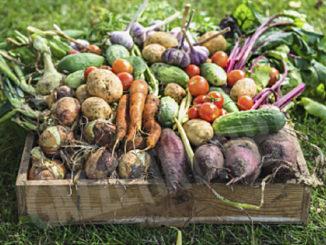 Domenica ritorna Mercato della Terra di Bra, con gruppo affiatato di produttori e di contadini, coerente con la filosofia Slow Food