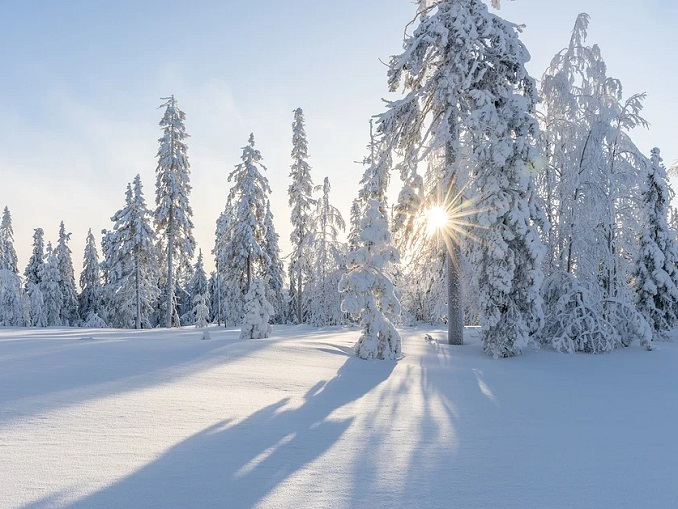 neve-alberi-inverno