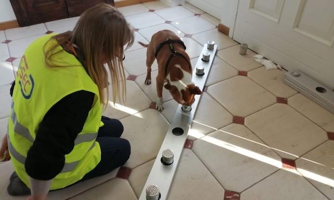 Addestramento di un cane anti Covid