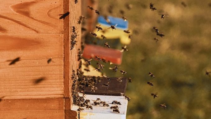 Aspromiele Piemonte: corso on line per diventare apicoltore