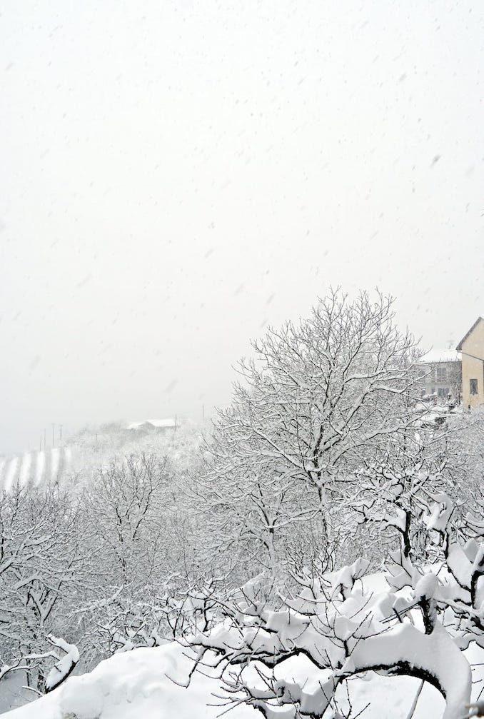 Le fotografie della prima neve del 2021 43