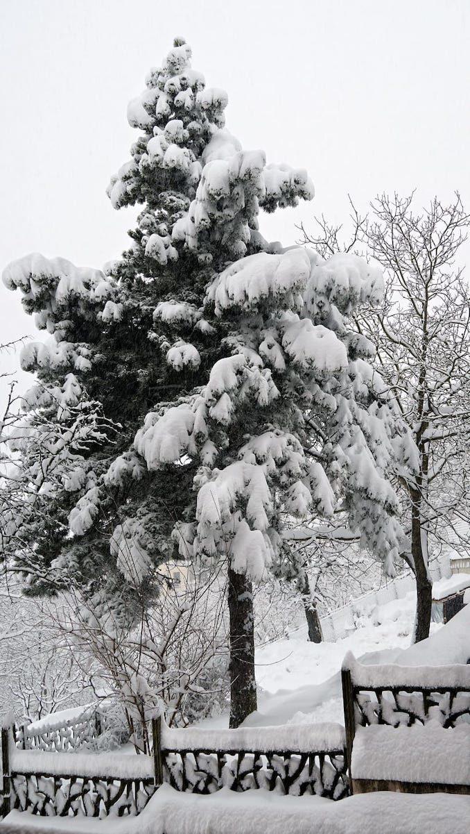 Le fotografie della prima neve del 2021 44