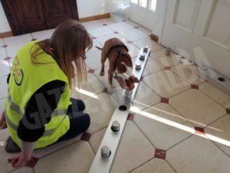 I cani anti Covid si addestrano e da febbraio saranno all'aeroporto di Levaldigi