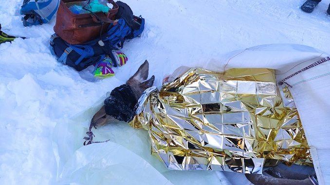 Intervento congiunto per cercare di salvare una cerva ferita in alta valle Varaita