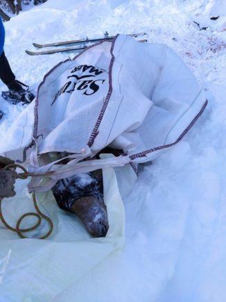 Intervento congiunto per cercare di salvare una cerva ferita in alta valle Varaita 1