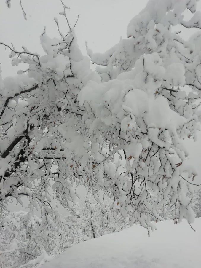 Le fotografie della prima neve del 2021 3