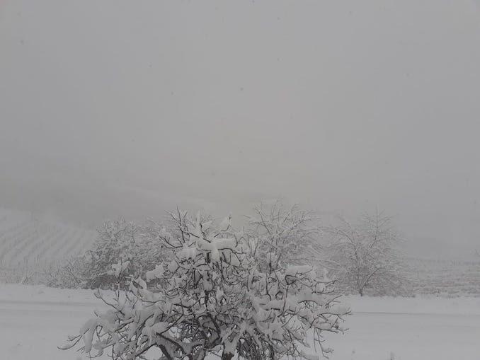 Le fotografie della prima neve del 2021 78