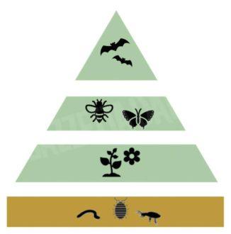 Pan: Piano d'azione italiano per la biodiversità e le sue linee guida