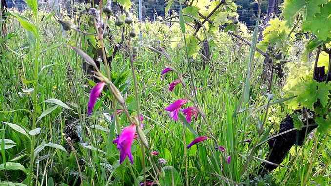 Pan: Piano d'azione italiano per la biodiversità e le sue linee guida 2
