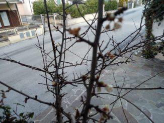 La fioritura del pruno di Gualdo Tadino, paese gemellato con Bra