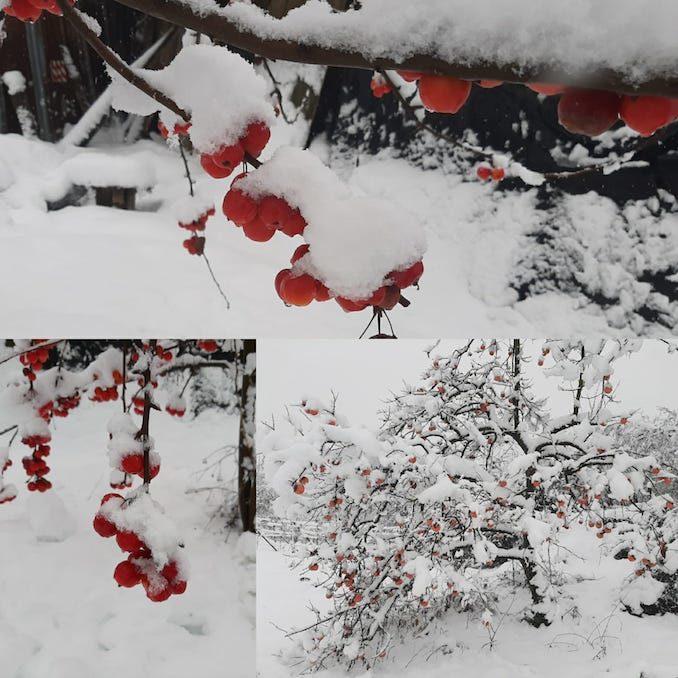 Le fotografie della prima neve del 2021 49
