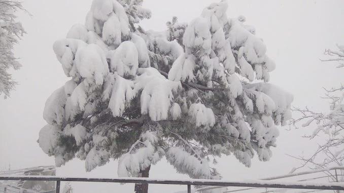 Le fotografie della prima neve del 2021 50