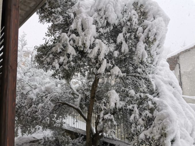 Le foto della prima nevicata del 2021 2