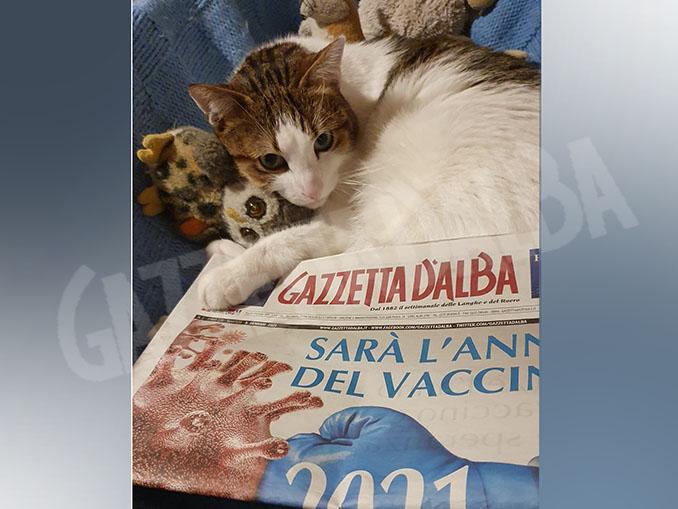 Il gatto Giogi legge Gazzetta d'Alba