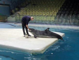 Il centro ricci di Novello ha soccorso la delfina dell'acquario di Teheran