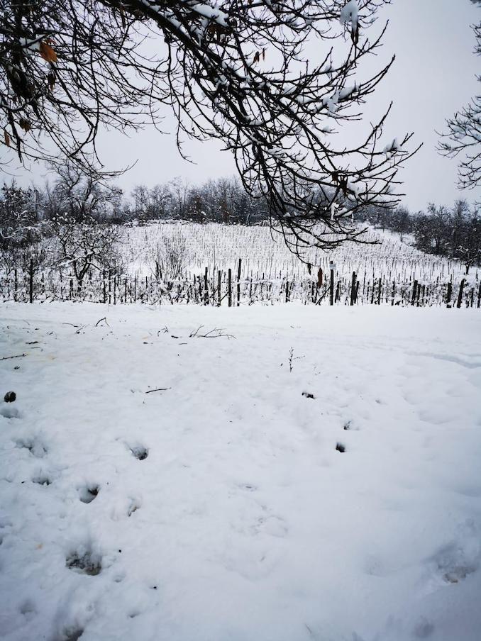 Le fotografie della prima neve del 2021 80