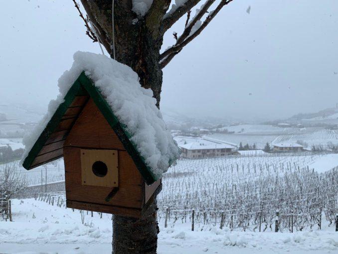Le foto della prima nevicata del 2021 10