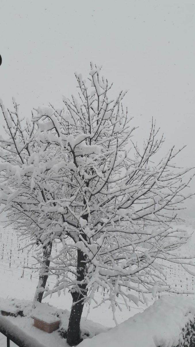Le foto della prima nevicata del 2021 7
