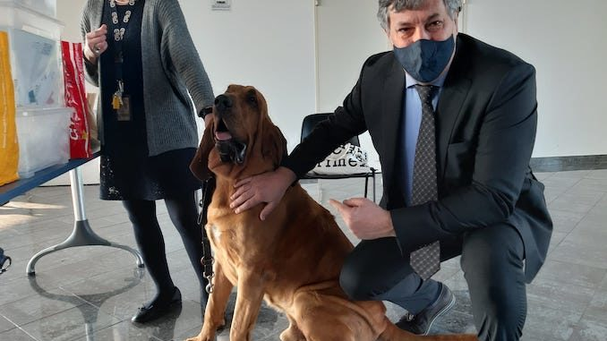 Covid: all'aeroporto di Cuneo sono arrivati primi cani che fiutano virus