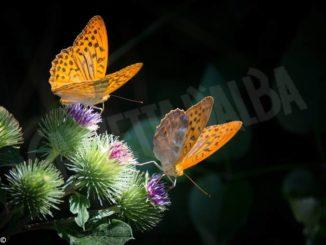 Che cosa fare per salvare la biodiversità in Langa e Roero